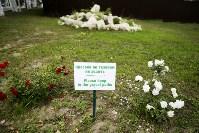 В Ясной Поляне открылся Центр поддержки одаренных детей, Фото: 22