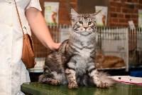 Выставка кошек в Искре, Фото: 51