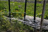 Бродячие собаки погубили рассаду тулячки и довели ее до сердечного приступа, Фото: 7