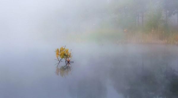 Островок в тумане.
