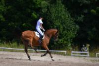 В Ясной поляне стартовал турнир по конному спорту, Фото: 101