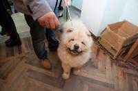 Выставка собак в Туле, 29.11.2015, Фото: 120
