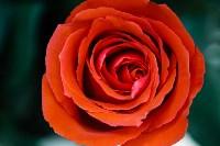 Ассортимент тульских цветочных магазинов. 28.02.2015, Фото: 58