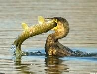 Смотаться на рыбалку., Фото: 7