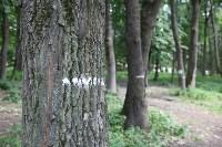 реконструкция платоновского парка вторая очередь, Фото: 22
