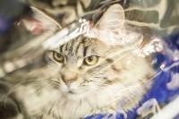 """Выставка """"Пряничные кошки"""". 15-16 августа 2015 года., Фото: 100"""