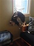 Кошки и собаки, проигравшие битву с мебелью, Фото: 3