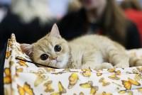 Выставка кошек, Фото: 10