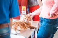 Международная выставка кошек. 16-17 апреля 2016 года, Фото: 98