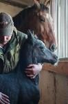 «Куликово поле» объявляет конкурс на лучшее имя для маленькой лошадки, Фото: 8