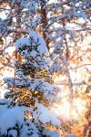 Снежное Поленово, Фото: 73