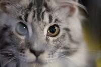 В Туле прошла выставка «Пряничные кошки» , Фото: 24