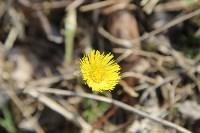 Краски весны в Туле, Фото: 36