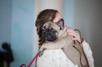 Выставка собак в Туле, 29.11.2015, Фото: 6