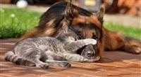 Дружба животных, Фото: 2