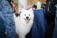 Выставка собак в Туле, 29.11.2015, Фото: 60