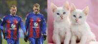 Братья Березуцкие (слева) и их «братья» из мира кошачьих справа. Хитрый взгляд... Острый профиль., Фото: 5