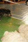 В Туле прошла всероссийская выставка собак, Фото: 21