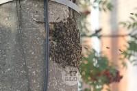 В Туле в фонарном столбе поселились пчелы, Фото: 6