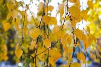Золотая осень в Туле-2019, Фото: 51
