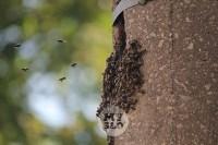 В Туле в фонарном столбе поселились пчелы, Фото: 5