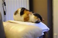 Котики устали, Фото: 5