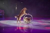 Открытие тульского цирка, Фото: 61