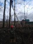 Сильный ветер в Туле повалил деревья, Фото: 9