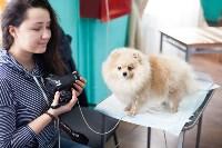 Выставка собак в Туле, 29.11.2015, Фото: 101