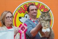 Выставка кошек в Туле, Фото: 68
