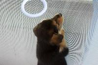 В тульском «Макси» прошел благотворительный фестиваль помощи животным, Фото: 5