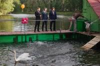Запуск лебедей в верхний пруд Центрального парка Тулы, Фото: 18