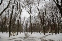 Рогожинский парк, зима 2019, Фото: 4