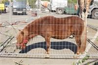 Цирк огромных зверей. Тула, Осиновая гора, 1, Фото: 12