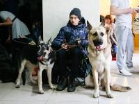 Выставка собак в Туле, Фото: 6