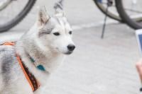 В Туле прошел большой велопарад, Фото: 224