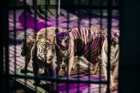 Шоу Lovero в тульском цирке, Фото: 39