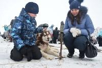 Праздник северных собак на Куликовом поле , Фото: 59