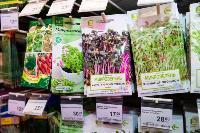 Какие семена выбрать и как правильно ухаживать за рассадой, Фото: 37
