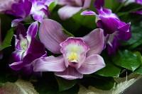 Ассортимент тульских цветочных магазинов. 28.02.2015, Фото: 8