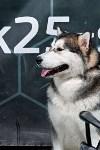 Выставка собак в Туле 26.01, Фото: 42