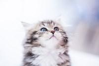 """Выставка """"Пряничные кошки"""". 15-16 августа 2015 года., Фото: 87"""
