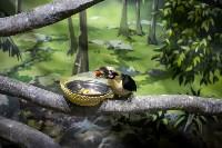 Тульский экзотариум: животные, Фото: 26
