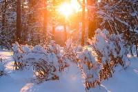Снежное Поленово, Фото: 75