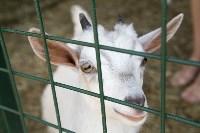 Зоопарк на набережной Упы в Туле, Фото: 15