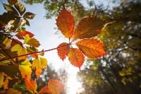 Золотая осень в Тульской области, Фото: 66