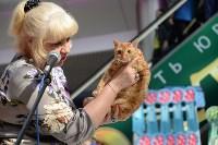 """Выставка """"Пряничные кошки"""" в ТРЦ """"Макси"""", Фото: 91"""