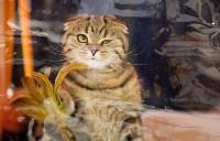 Выставка кошек. 4 и 5 апреля 2015 года в ГКЗ., Фото: 62