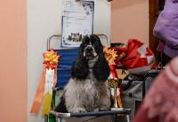 """Выставки собак в ДК """"Косогорец"""", Фото: 71"""