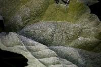 Известковая пыль в Барсуках, Фото: 8